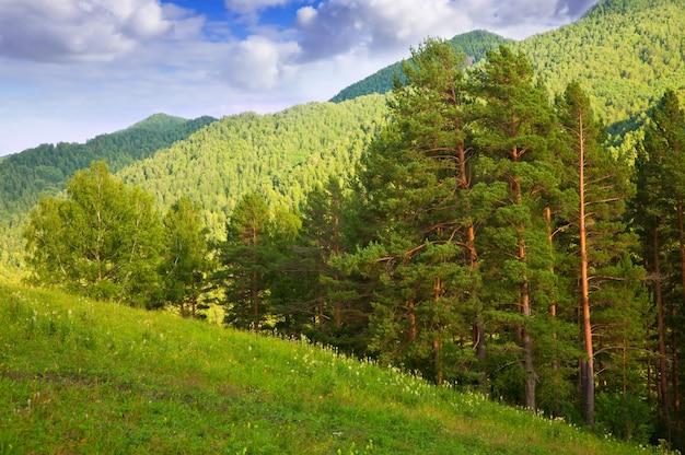 Montagnes de l'altaï. sibérie