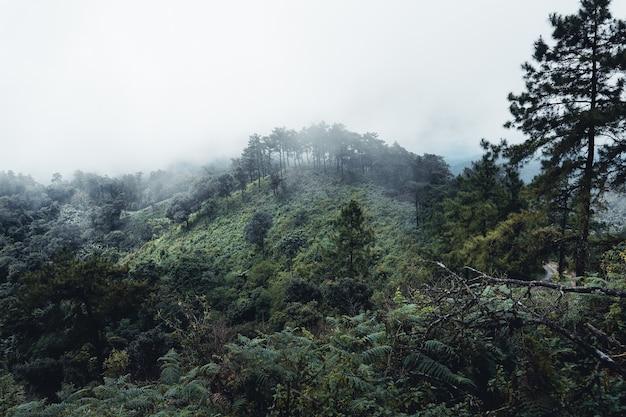 Montagnes et arbres verts pendant la journée