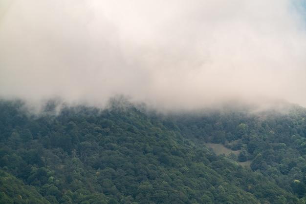 Montagnes couvertes de forêt verte dense