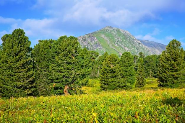 Montagnes forestières