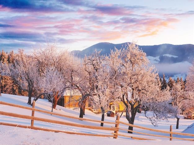 Des montagnes incroyables au soleil du matin. carpates, ukraine, europe.