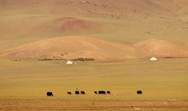 Montagnes de la mongolie occidentale