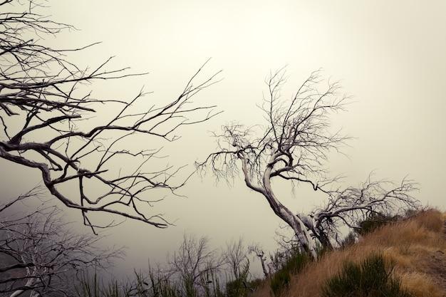 Montagnes obscures