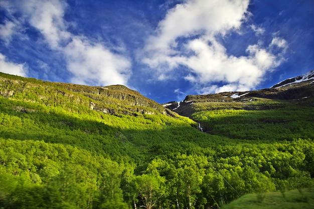 Montagnes vertes avec des arbres