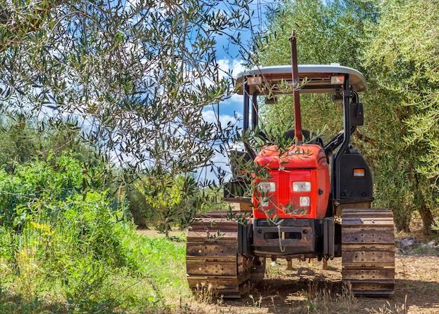 Montepulciano, italie - 25 août 2013: tracteur rouge se dresse au milieu d'une oliveraie.