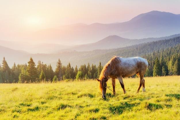 Monter dans les montagnes au coucher du soleil