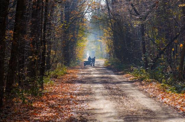 Montez dans un chariot tiré par des chevaux dans les bois d'automne aux feuilles jaunes. calèche sur route d'automne