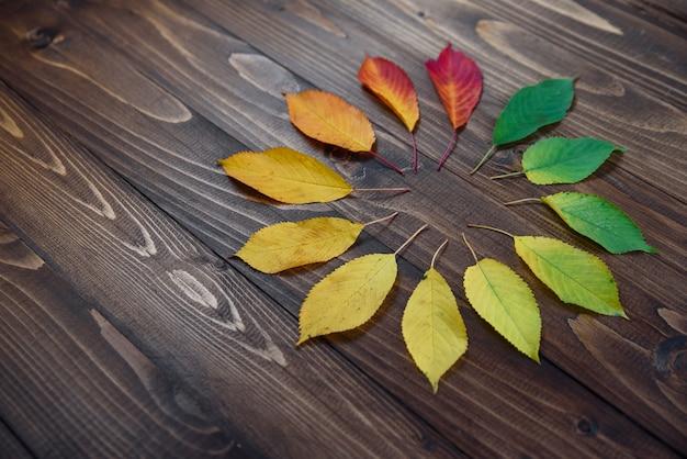 Montre naturelle des feuilles d'automne. concept d'horloge. feuilles d'automne transition du vert au rouge sur fond en bois