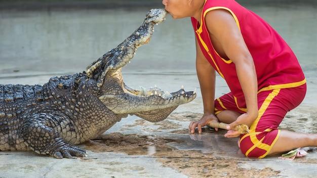 Montrer la souris embrassant du crocodile, thaïlande