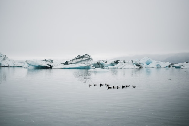 Montres touristiques glacier dans l'eau en islande