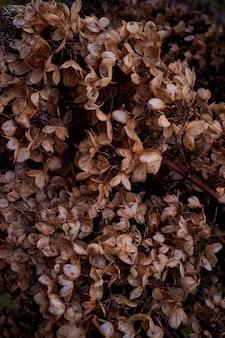 Moody photo d'art sombre avec de petites fleurs séchées d'hortensia sur un fond sombre et sec