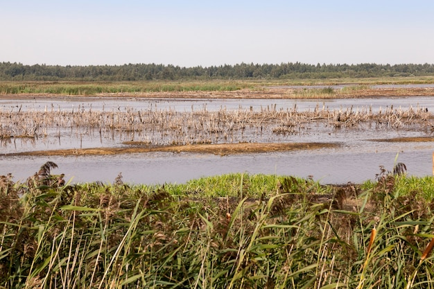 Moorland, heure d'été - photographié le territoire dans lequel se trouve le marais, la fin de la saison estivale, un espace ouvert