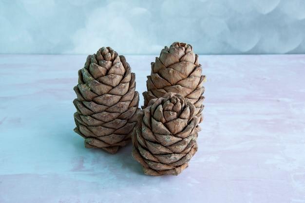 Un morceau de cèdre, recouvert de noix. cône de pin de sibérie. grosse pomme de pin brune sur la table