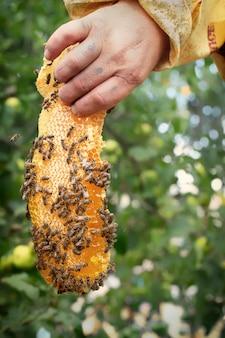 Un morceau de cire d'abeille dans la main de l'apiculteur