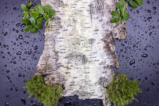 Un morceau d'écorce d'arbre avec de la mousse et des feuilles d'airelle sur une surface humide avec des gouttes d'eau