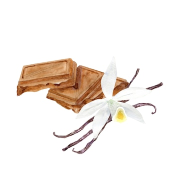 Morceaux de chocolat aquarelle avec fleur de vanille