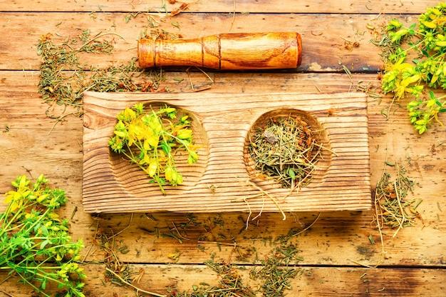 Mortier en bois avec pilon aux herbes médicinales. hypericum médicinal en phytothérapie.