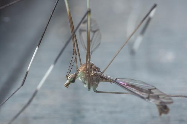 Mosquito macro on leaf