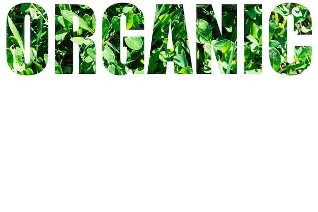 Le mot bio d'herbe verte isolé sur fond blanc. éléments pour votre conception.