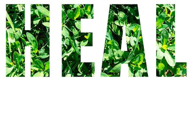 Le mot guérir de l'herbe verte isolé sur fond blanc. éléments pour votre conception.