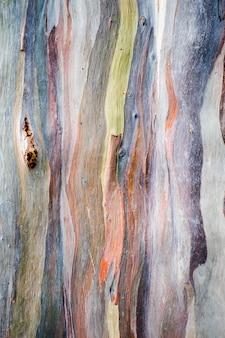 Motif abstrait de l'écorce colorée d'eucalyptus deglupta