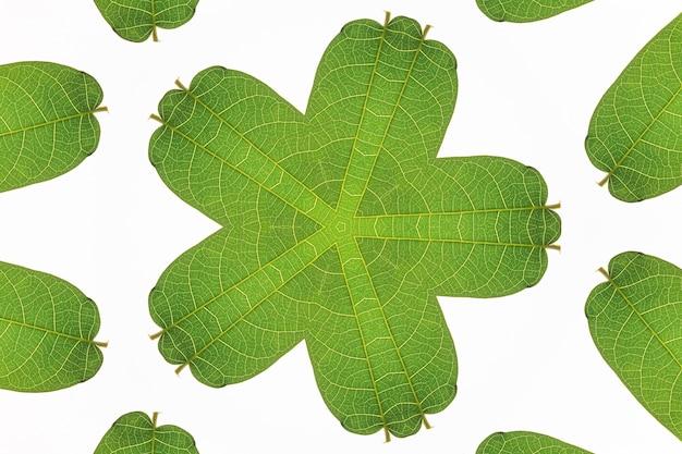Motif abstrait fond vert transparent avec fleurs décoratives et feuilles sur fond blanc.