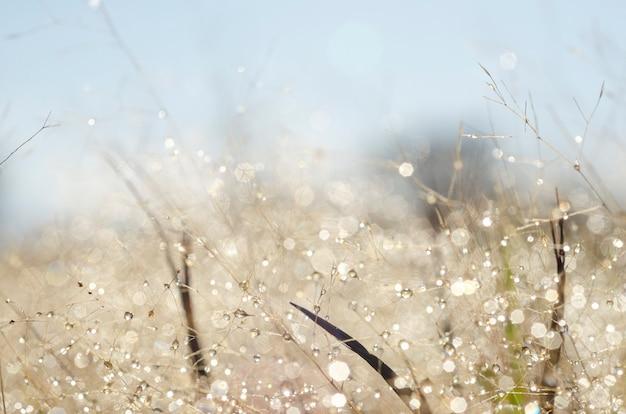 Motif de bokeh et gouttelettes d'eau sur l'herbe floue
