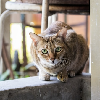 Motif chat brun