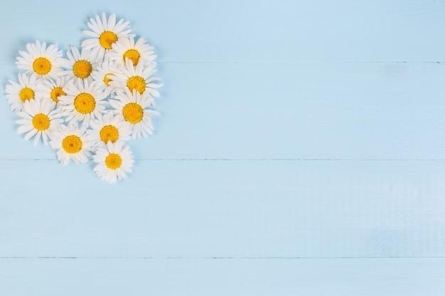 Motif coeur floral d'été avec fleur de marguerite de camomille sur fond de bois vintage bleu