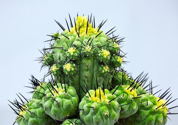 Motif coloré de plantes du désert de cactus.