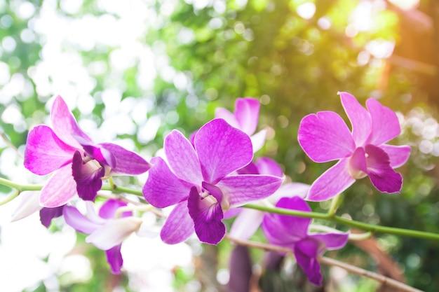 Motif de copie de fleur proche tropical