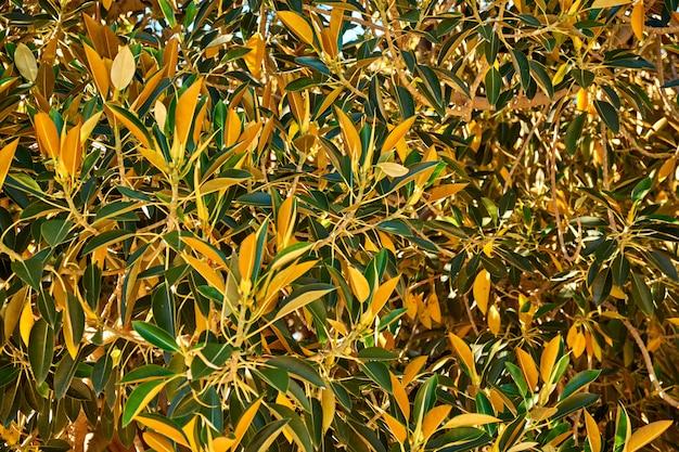 Motif de feuillage vert jaune. fond naturel.