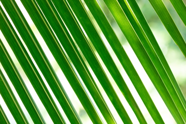 Motif feuille de coco verte