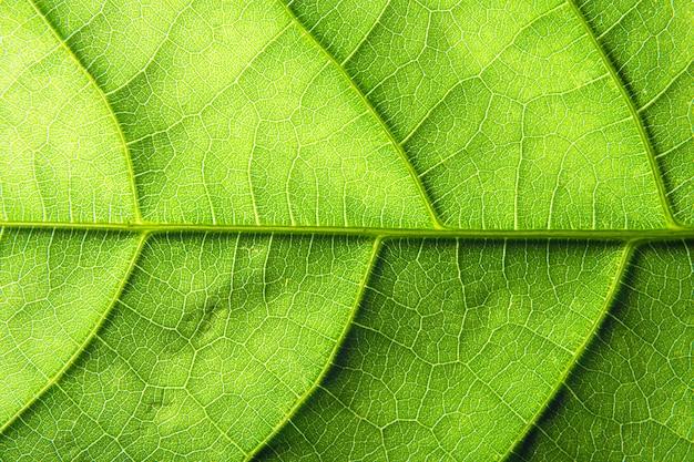 Motif feuille macro fond vert