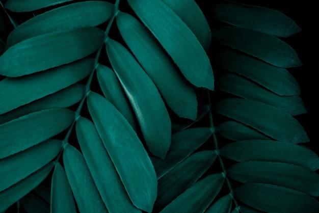 Motif de feuille vert foncé fond de nature tropicale