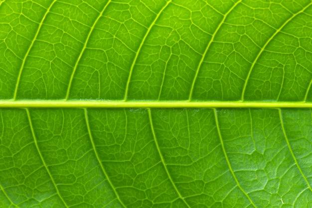 Motif sur feuille verte