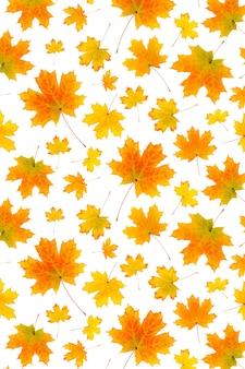 Motif de feuilles d'automne orange naturel sur fond blanc, comme toile de fond ou texture. papier peint d'automne pour votre conception. vue de dessus mise à plat.