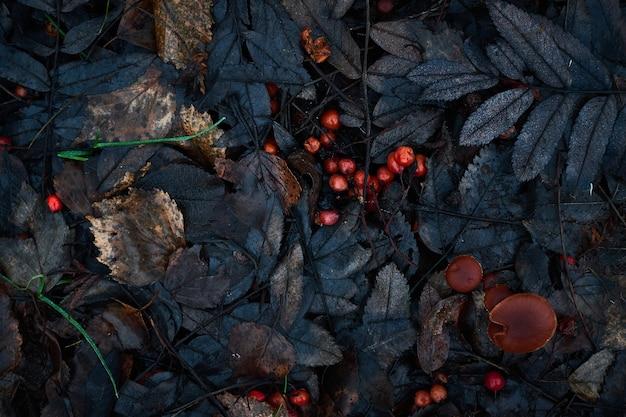Motif de feuilles d'automne, photo florale monochrome monochrome sombre art floral avec de petites feuilles séchées