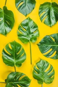 Motif de feuilles de monstera tropical sur fond jaune