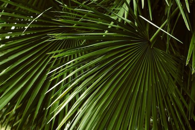 Motif feuilles de palmier, naturel tropical abstrait
