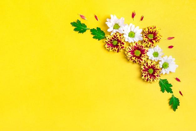Motif de fleurs asters rouges et blancs, feuilles vertes isolées sur jaune