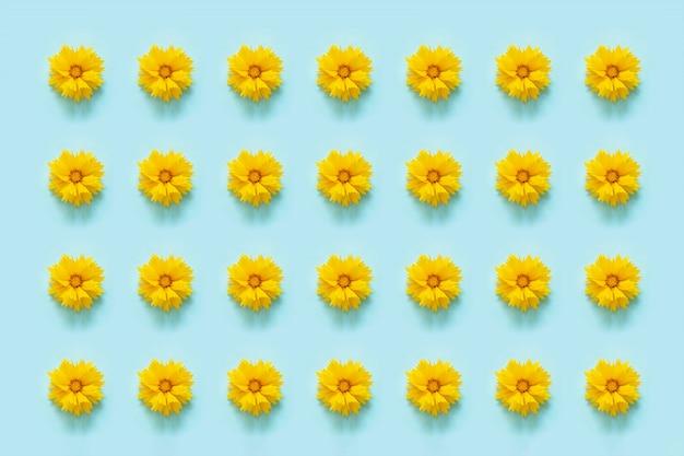 Motif de fleurs. fleurs jaunes naturelles sur fond bleu. modèle pour votre conception vue de dessus flat lay