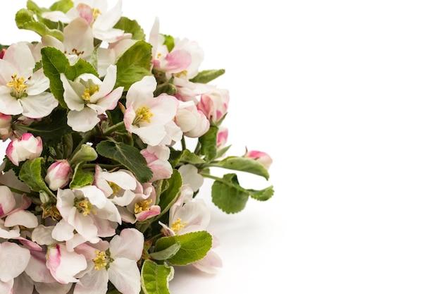 Motif De Fleurs De Poire Sur Fond Blanc. Photo Premium