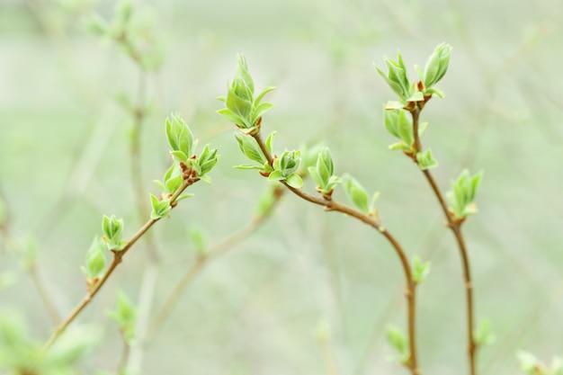 Motif floral de branches fraîches de printemps avec de nouvelles feuilles vertes. mise au point sélective.