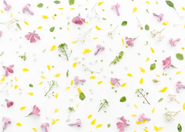 Motif floral décoratif