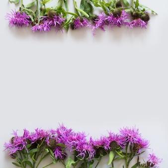 Motif floral de fleurs violettes et roses. mise à plat. vue d'en-haut.