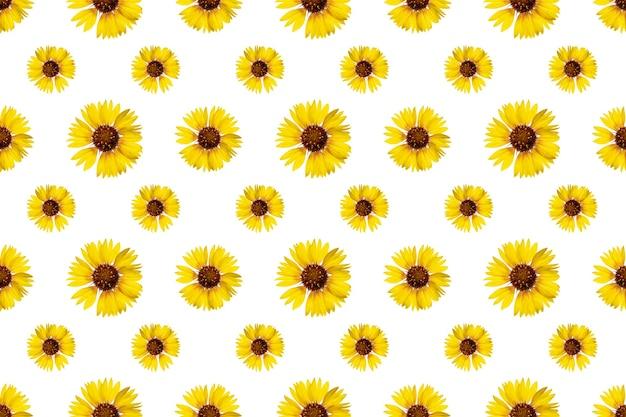 Motif Floral Harmonieux De Fleurs De Rudbeckia. Fond Isolé Blanc. Fermer. Prise De Vue Macro. Concept Pour L'impression Et La Conception. Photo Premium