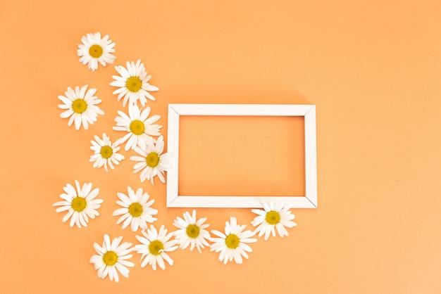 Motif floral avec petites fleurs de marguerite feuilles et pétales