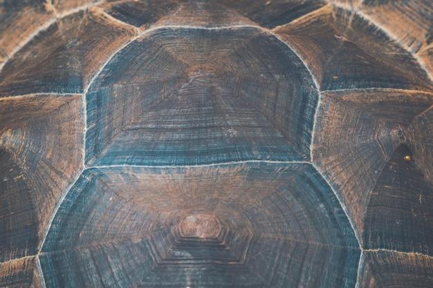 Motif sur fond d'écaille de tortue