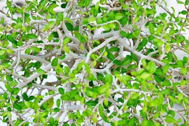 Motif de fond horizontal des feuilles abstraites vertes